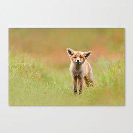 Funny Fox Kit Canvas Print