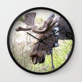 Watercolor Moose Bull 14, Old Beaver Ponds, RMNP, Colorado, Bell Ringer Wall Clock