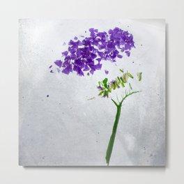 Botanical Blueprints - Statice Metal Print