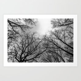 Scary black and white trees Art Print