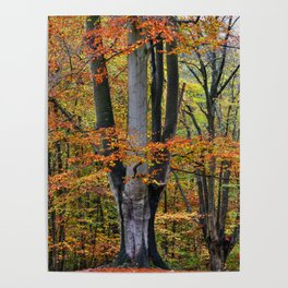 The Beauty of Fall Poster