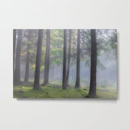 Lights in the forest - Kessock, The Highlands, Scotland Metal Print