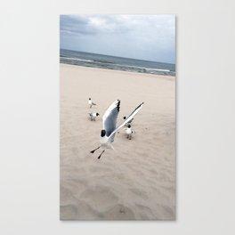 seagull gang at the beach Canvas Print