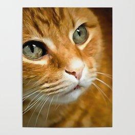 Adorable Ginger Tabby Cat Posing Poster