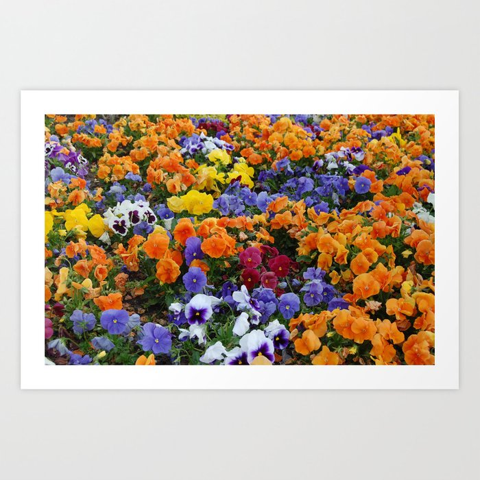 Pancy Flower 2 Art Print