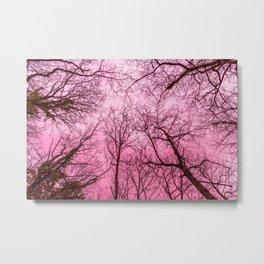 Pink sky, naked trees tops Metal Print