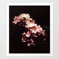 hydrangea Art Prints featuring Hydrangea by Christine Belanger