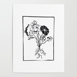 Botanical_Nasturtium Poster