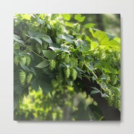 Smell the hops. Metal Print