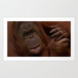 Orangutan Close-Up Art Print