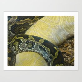 Boas Crossing Art Print