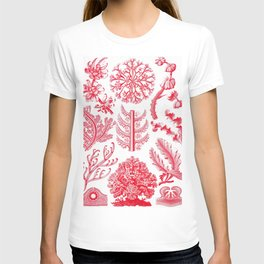 Ernst Haeckel Florideae Red Algae T-shirt