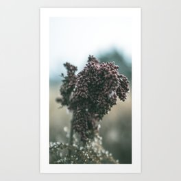 The Neutral Seed Art Print