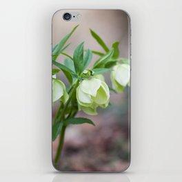 Green Hellebore iPhone Skin