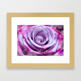 Rose of Love #Pink #Purple #art #society6 Framed Art Print