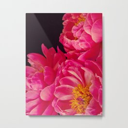 Hot Pink Peonies - Flower Photography Metal Print