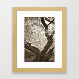 Cherry Blossoms in bloom at Capitol Building :: Washington DC Framed Art Print