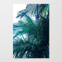 da palms. Canvas Print