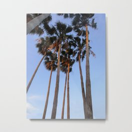 Palm Tree Photography | Miami Florida | Tropical Art | Exotic Metal Print