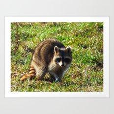 raccoon 2016 Art Print