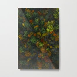 Autumnal forest trees #1 Metal Print