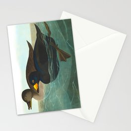 Scoter Duck Vintage Scientific Bird & Botanical Illustration Stationery Cards