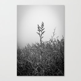 Above the Rest Canvas Print