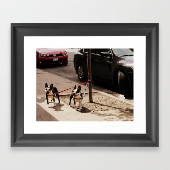 Boston Terriers ~ amped up for action! Framed Art Print