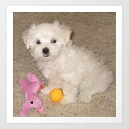 Maltese Puppy With His Toys Art Print