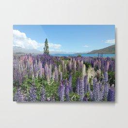 Colorful lupine towers Metal Print
