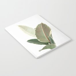 Ficus Teneke Notebook
