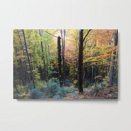 Autumn Metal Print