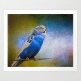 The Budgie Collection - Budgie 2 Art Print