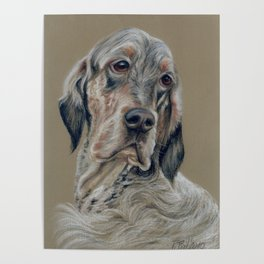 English Setter Dog Cute Pet portrait Pastel drawing on grey background Decor for dog lover Poster