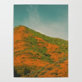 California Poppies 029 Poster