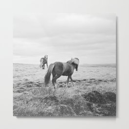 Modern Animal Print, Icelandic Horses Metal Print
