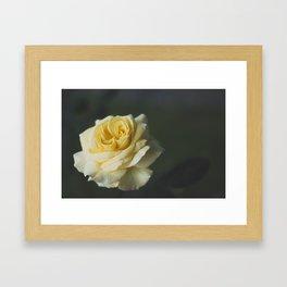 Yellow rose Framed Art Print
