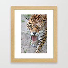 One Angry Cat Framed Art Print