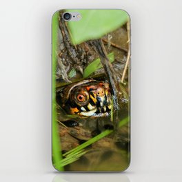 Box Turtle and Tadpoles iPhone Skin