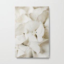 White Hydrangea Annabelle. Minimalistic print - fine art photography Metal Print