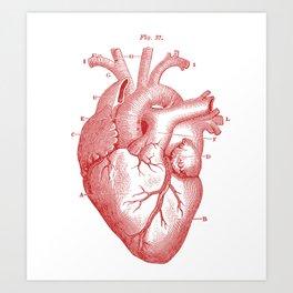 Anatomically Correct Heart Art Print