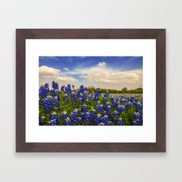 Bluebonnet Texas Framed Art Print