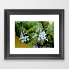 Two dollar flowers on my balcony Framed Art Print