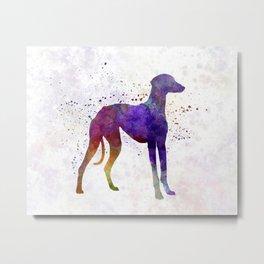 Arabian Greyhound in watercolor Metal Print