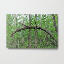 The Arch in Six Mile Metal Print