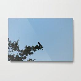 Busy Bird Metal Print
