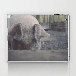 Pig in Oconaluftee Laptop & iPad Skin