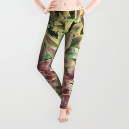 Green and Pink Succulent Leggings
