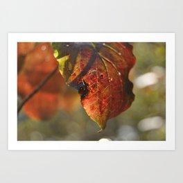 autumn red leaf Art Print
