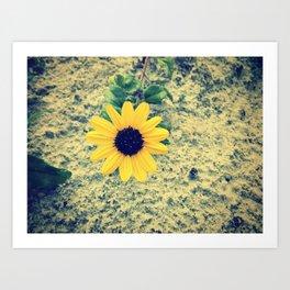 ☮☮ Art Print